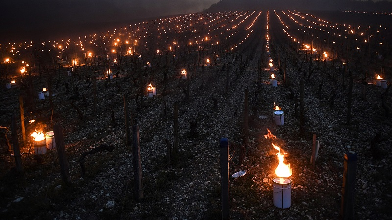 Vineyard hill against frost candles